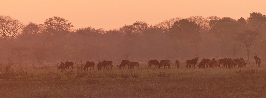 nanzhila plains - kafue wildlife destination